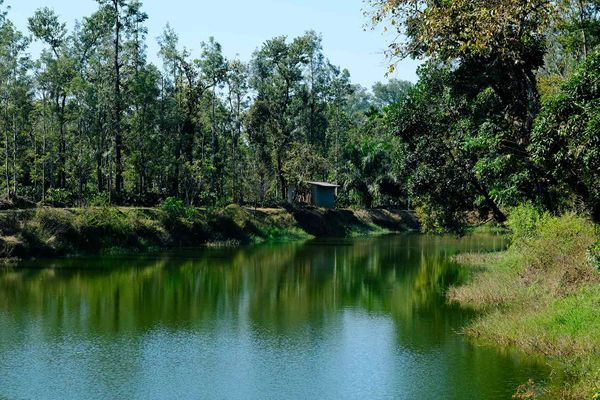 Malnad Diary: March